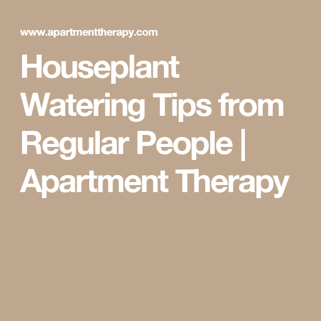 Houseplant Watering Tips from Regular People | Apartment Therapy