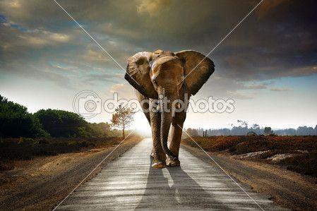 Wandern Elefanten — Stockdatei #5874398