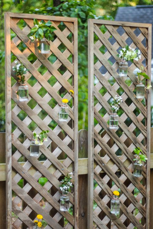 Create a living wall lattice privacy screen pretty handy for Lattice yard privacy screen