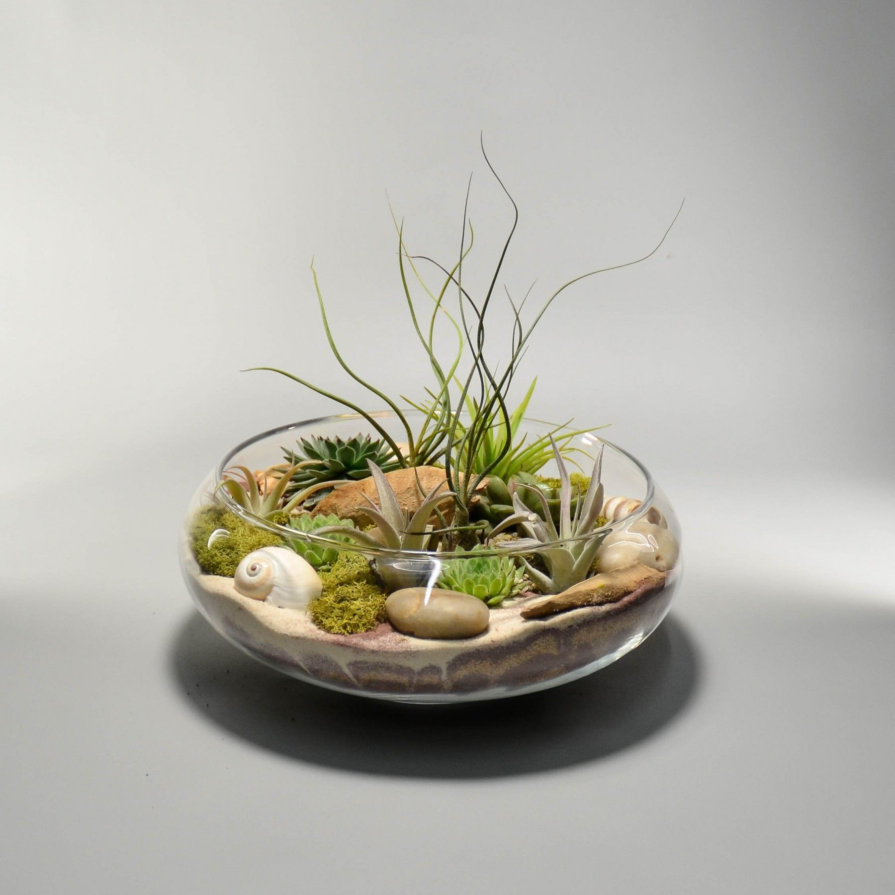 """9.5"""" Glass Lily Bowl Air plant terrarium, Plant decor"""