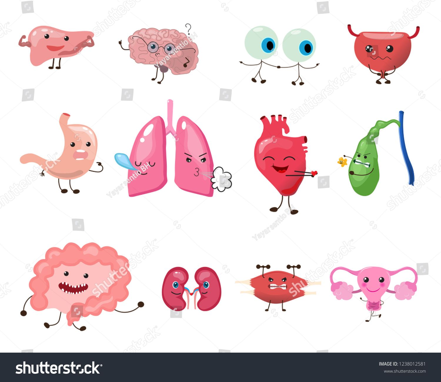 Image Heart And Lungs Clipart - Your Heart - Free Transparent PNG Download  - PNGkey
