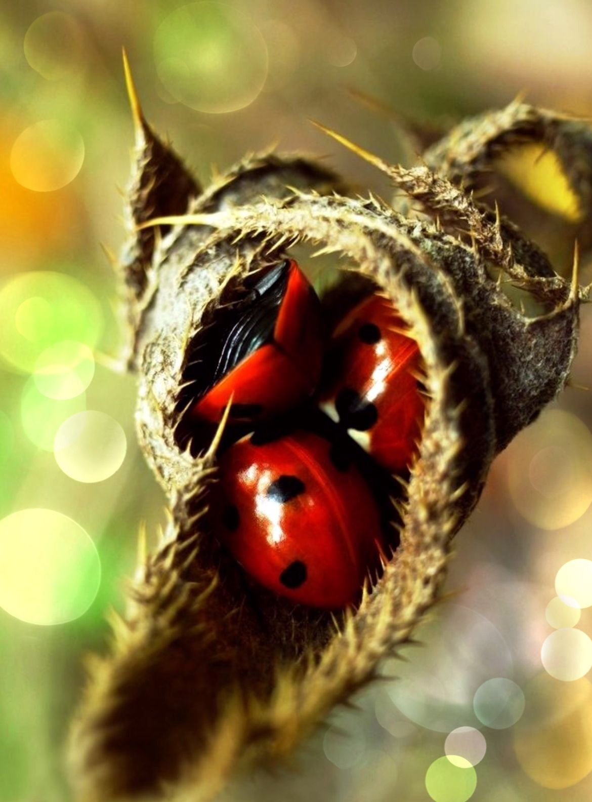 Pin By Helen Rodriguez On Lady Bugs With Images Ladybug