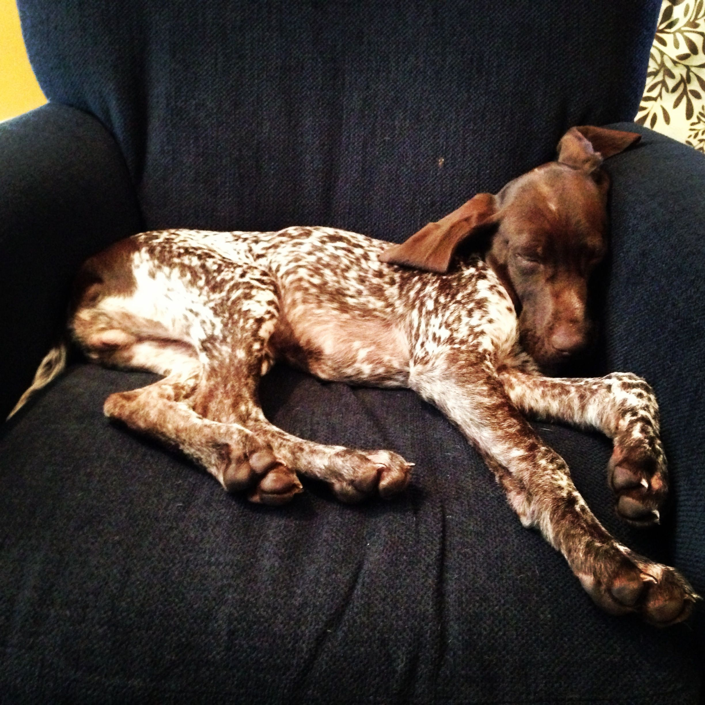So sweepy Animals, Dogs