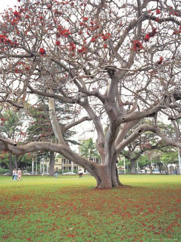 Tree with Red Flowers L�mina fotogr�fica en AllPosters.es