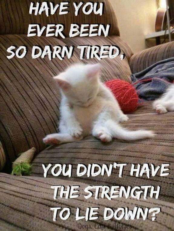 I Do Having Chronic Fatigue Is No Fun Cute Funny Animals