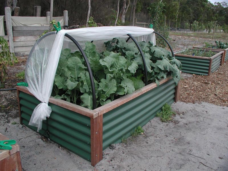 Corrugated Metal Raised Garden Bed Veggiepatch Links For Organic Growers And Gardeners