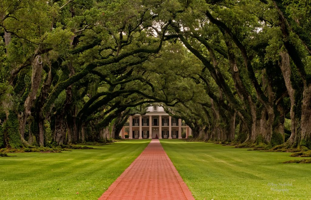 my dream, treelined driveway Tree lined driveway, Live