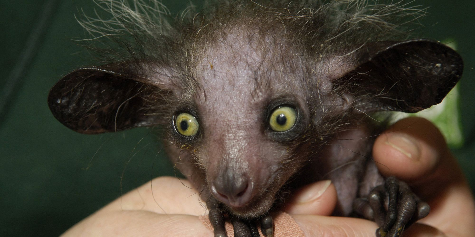 11 Of The Scariest Looking Creatures In The Animal Kingdom | Scary animals,  Weird looking animals, Bizarre animals