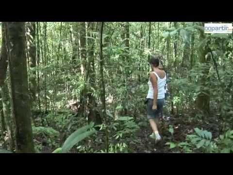 La Guyane Une Destination A Vivre Destinations Climat Equatorial Vacances