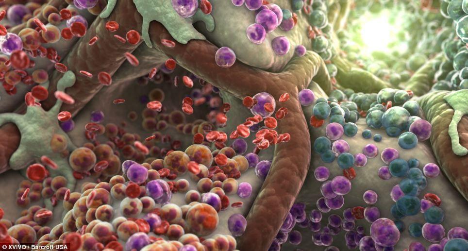 menselijke gezonde cellen - Google zoeken