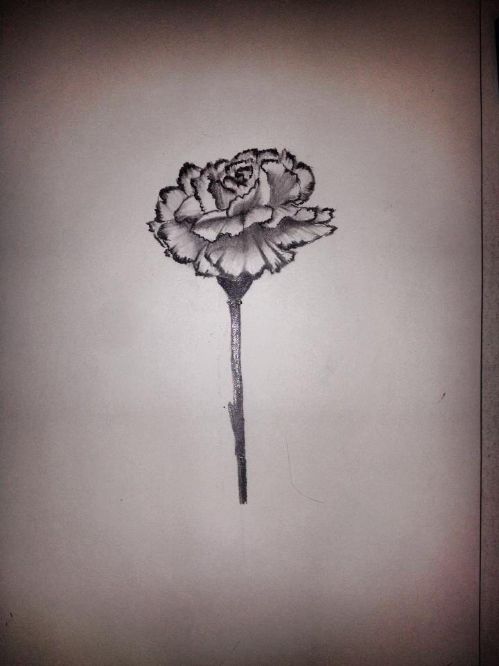 Pin By Ashley Plenert On Tattoo Carnation Tattoo Carnation Flower Tattoo Flower Tattoo