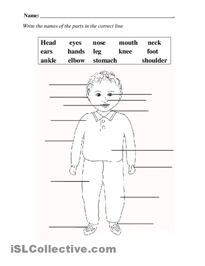 Human body worksheets for elementary students
