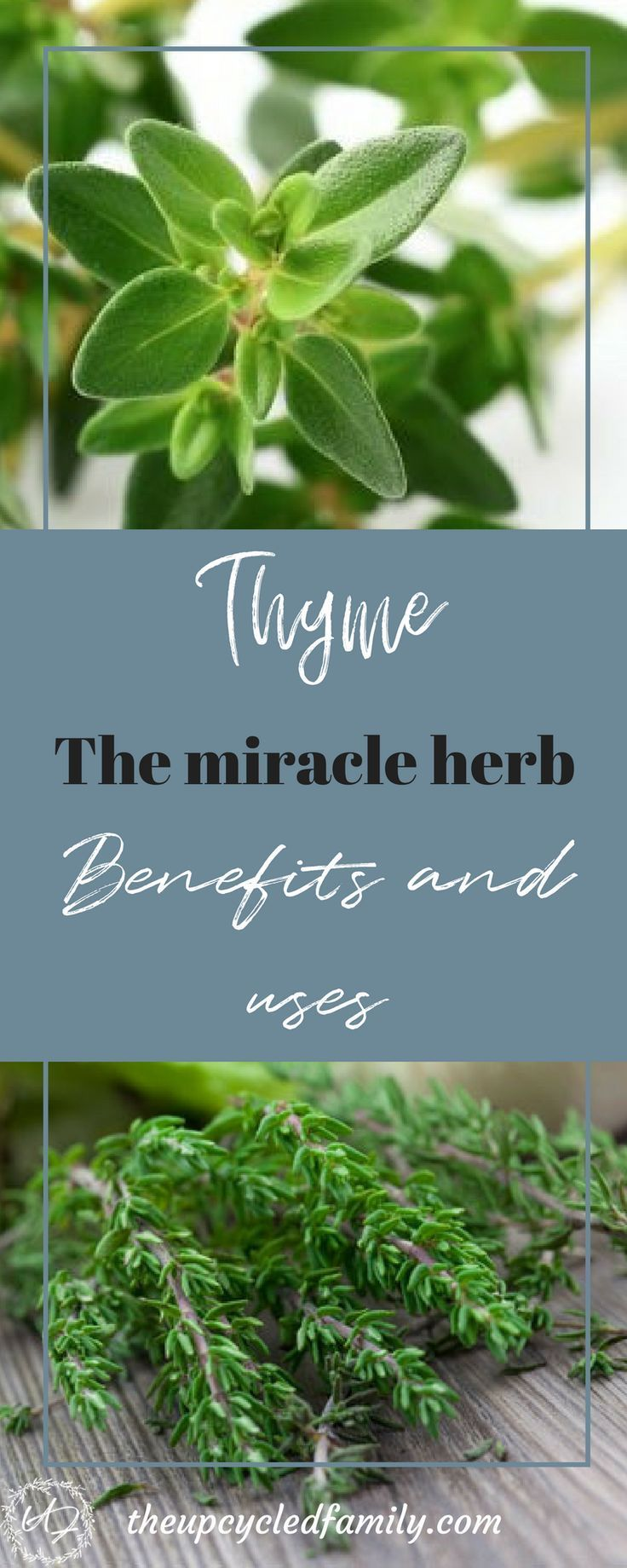 Thyme benefits and uses | Pinterest | Medicine cabinets, Athlete and ...
