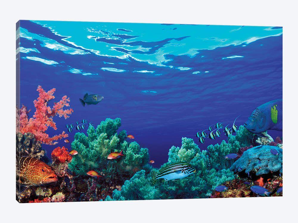 Underwater Coral Reef Community Art Print | iCanvas in ...