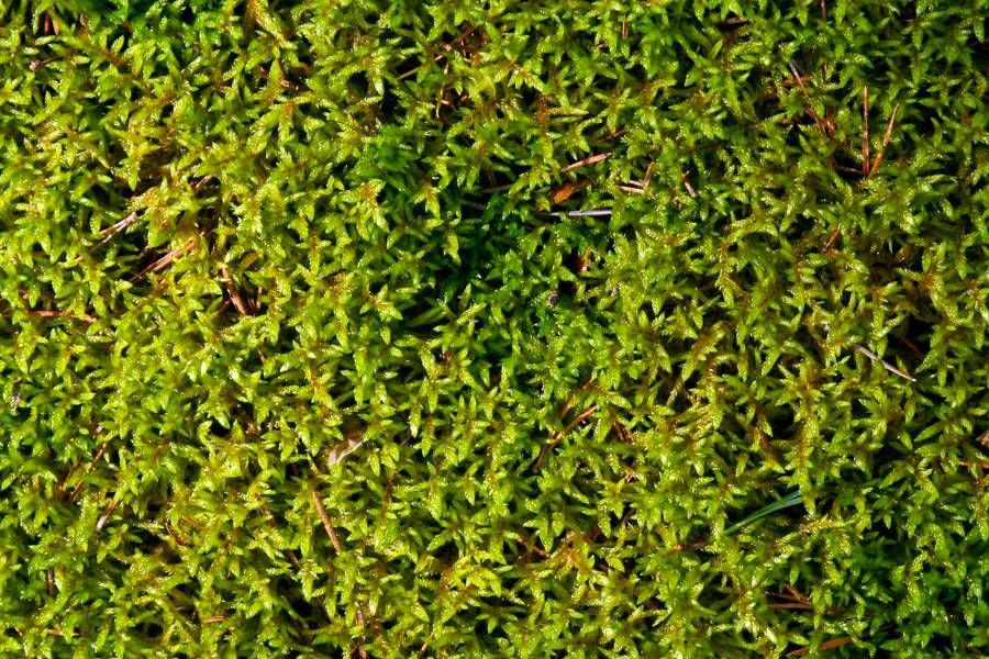 closeup moss ground free texture Kidney disease, Kidney