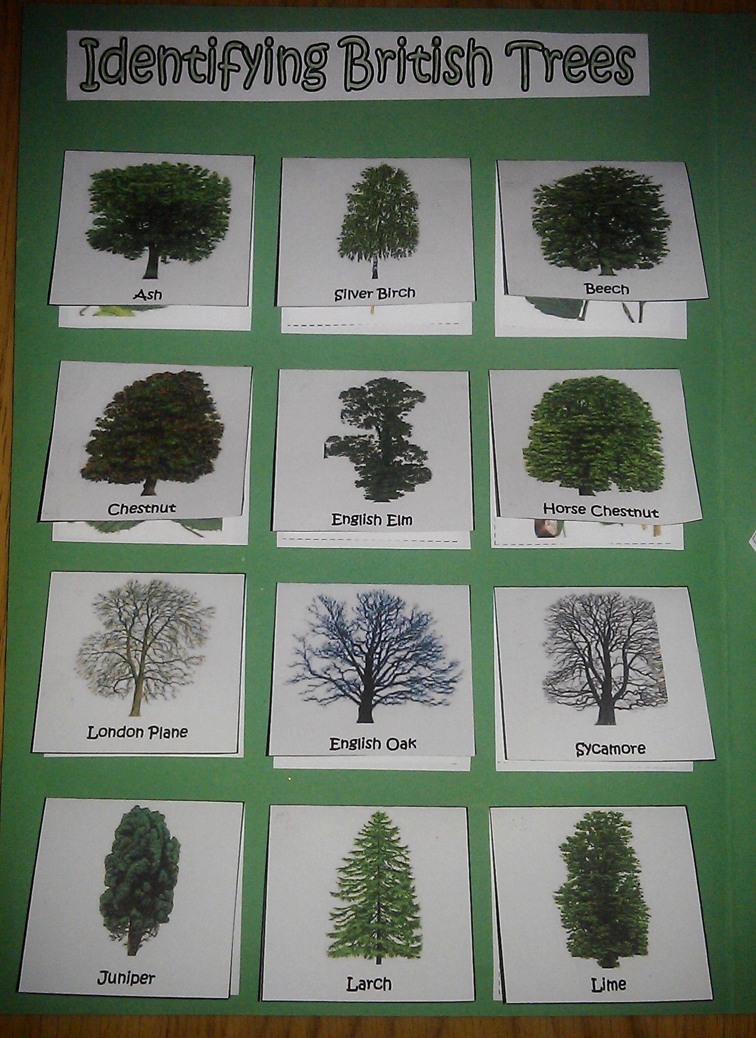 Types Of English Trees