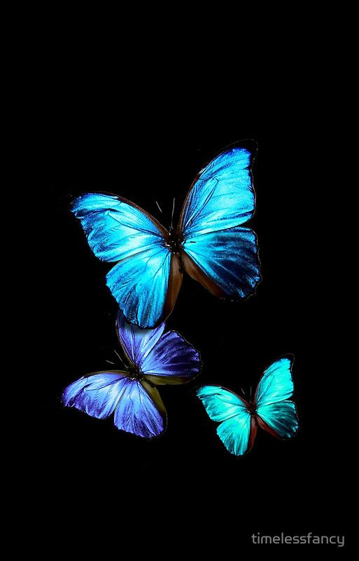 Blue And Black Butterfly Wallpaper Hd