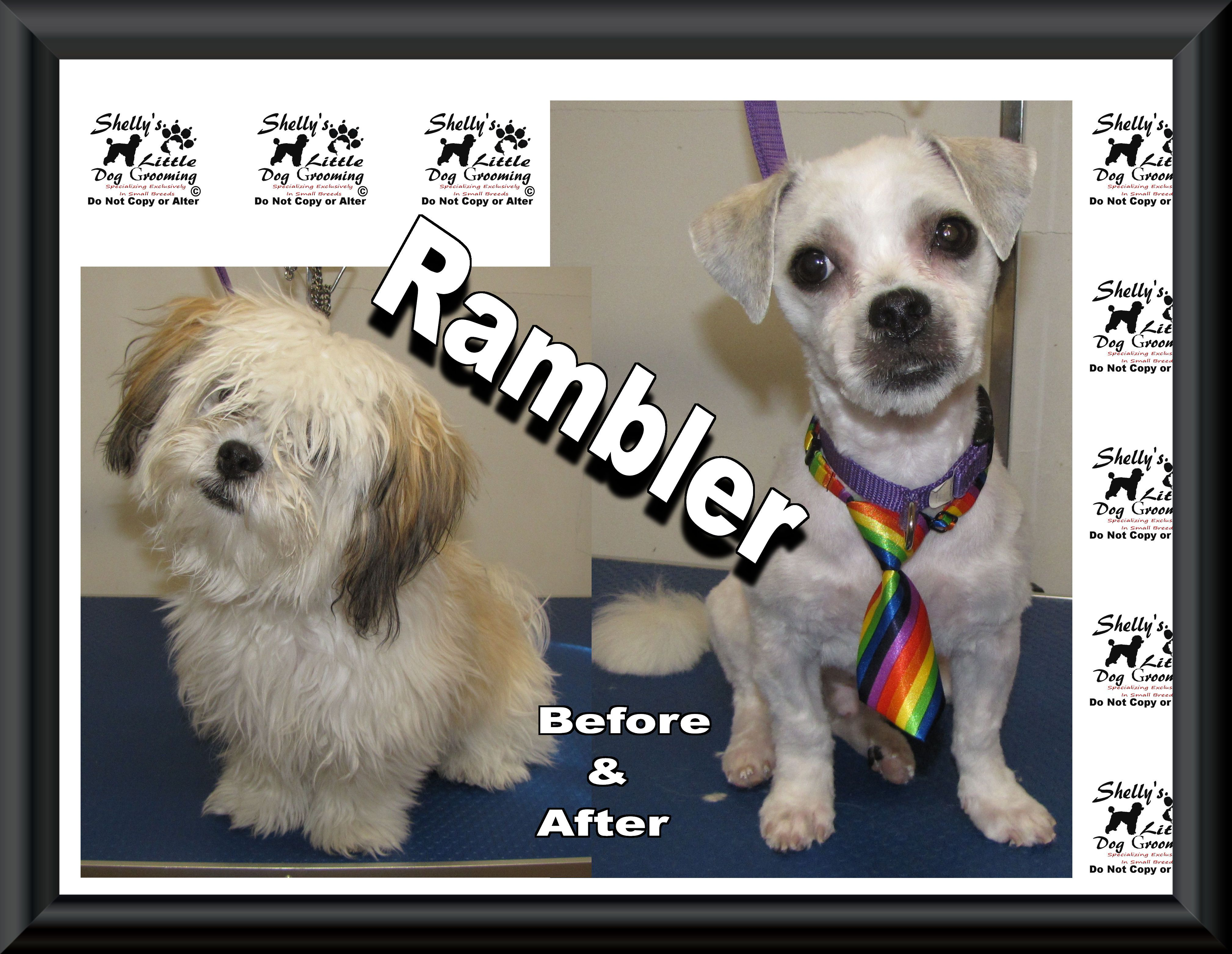 A Big Welcome To Rambler His 1st Time Here And He Did