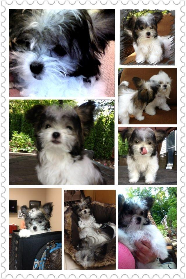 Tali Dolly Miki Dog Doggie Style Rare Breed