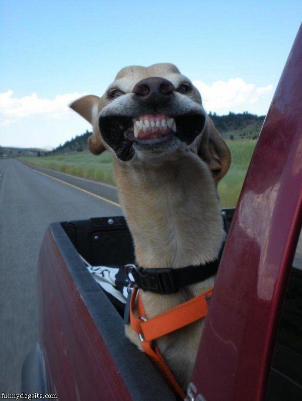 Funny Dog Photo: Riding Along Grin.:)