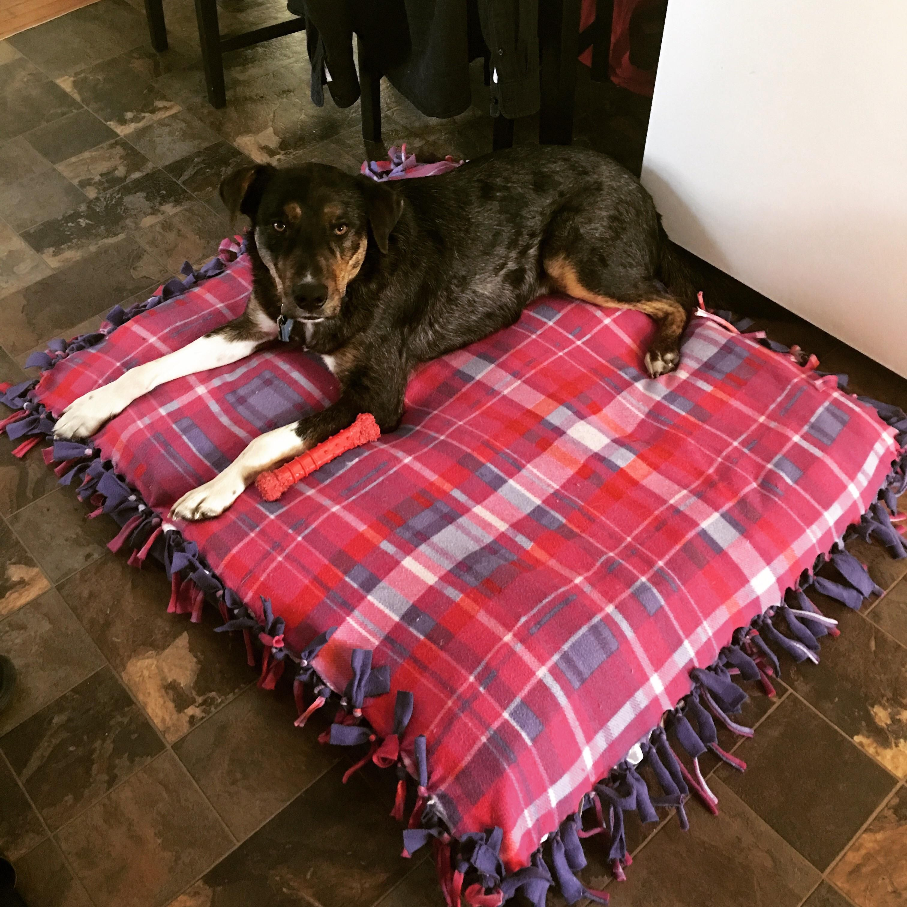 Easy Dog Bed Stuff A Fleece Tie Blanket With Old Clothes Towels