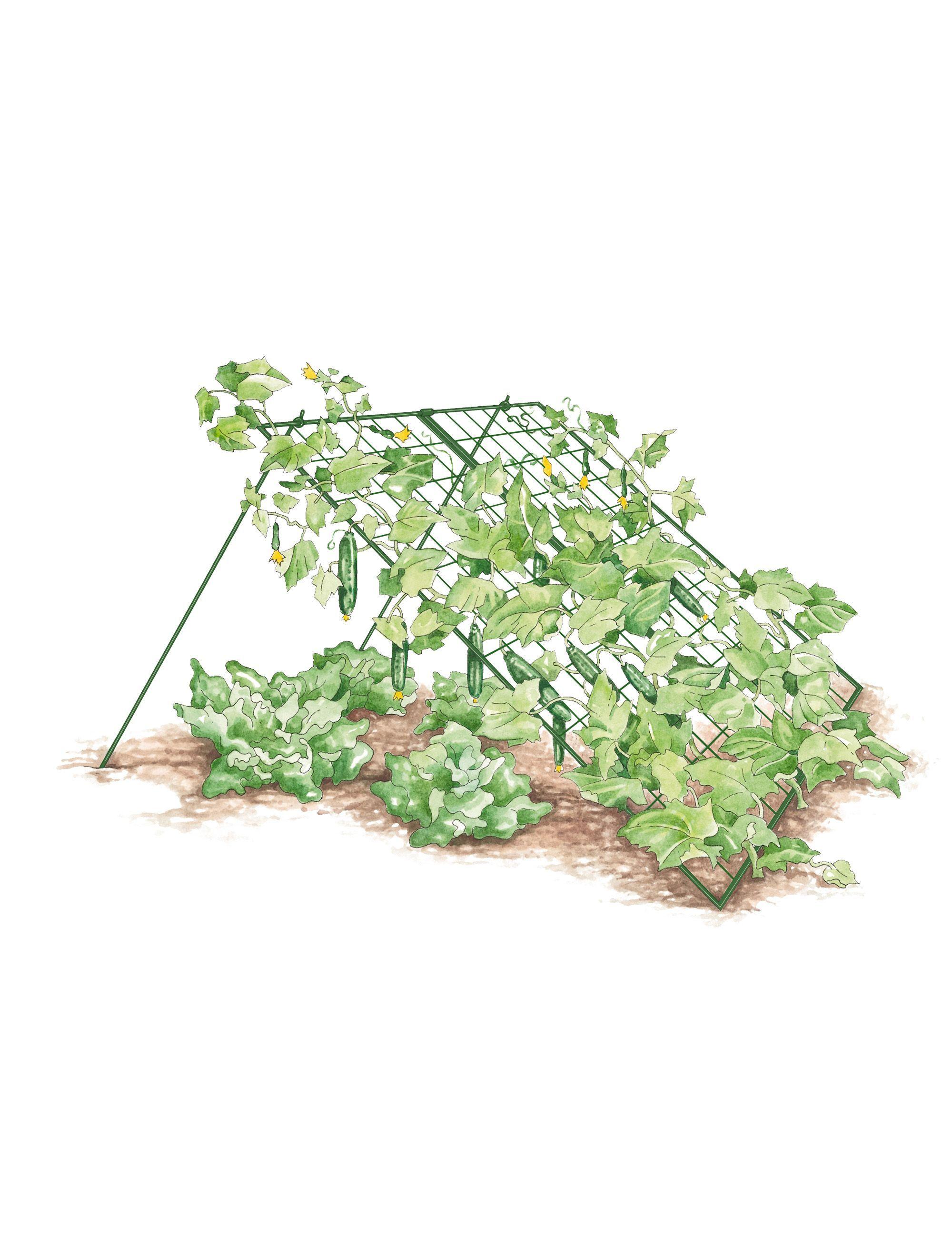 684d141c699b0dbe27e397f297b9630e - Gardener's Supply Company Large Cucumber Trellis