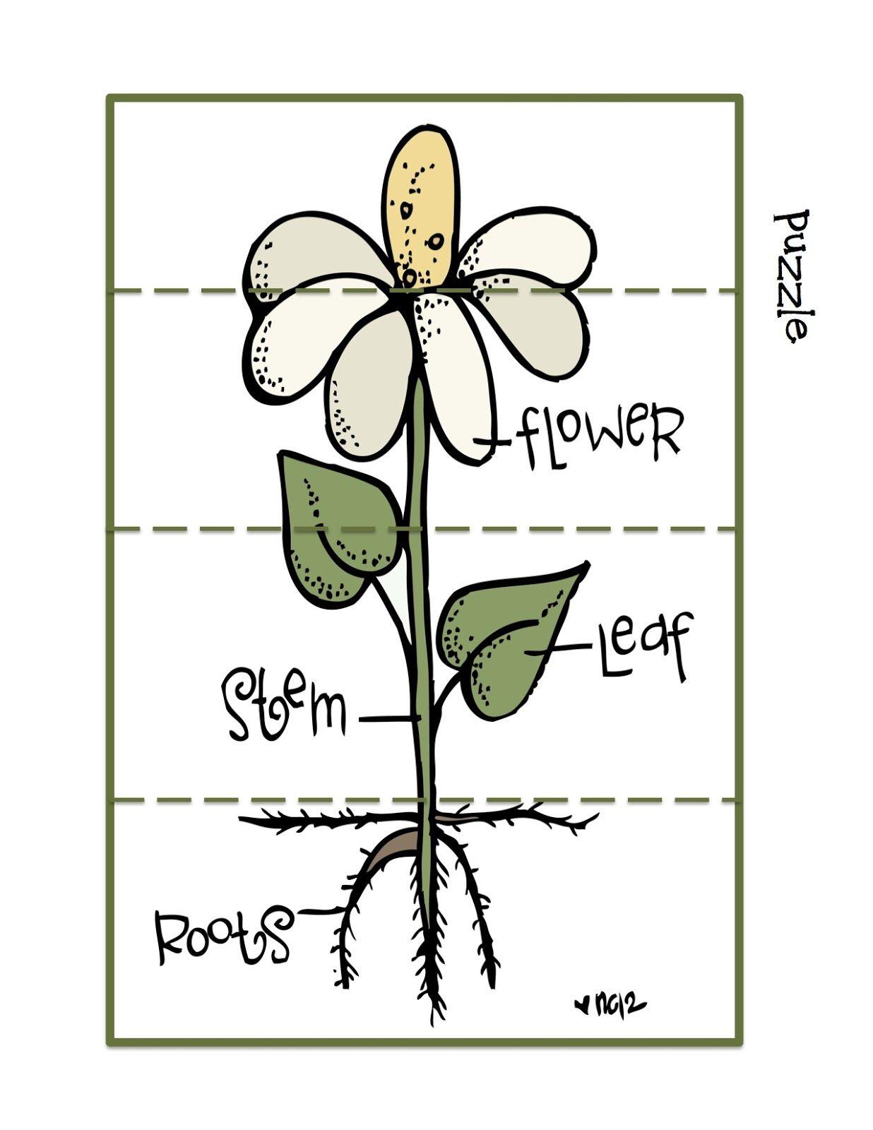 Flower Printable