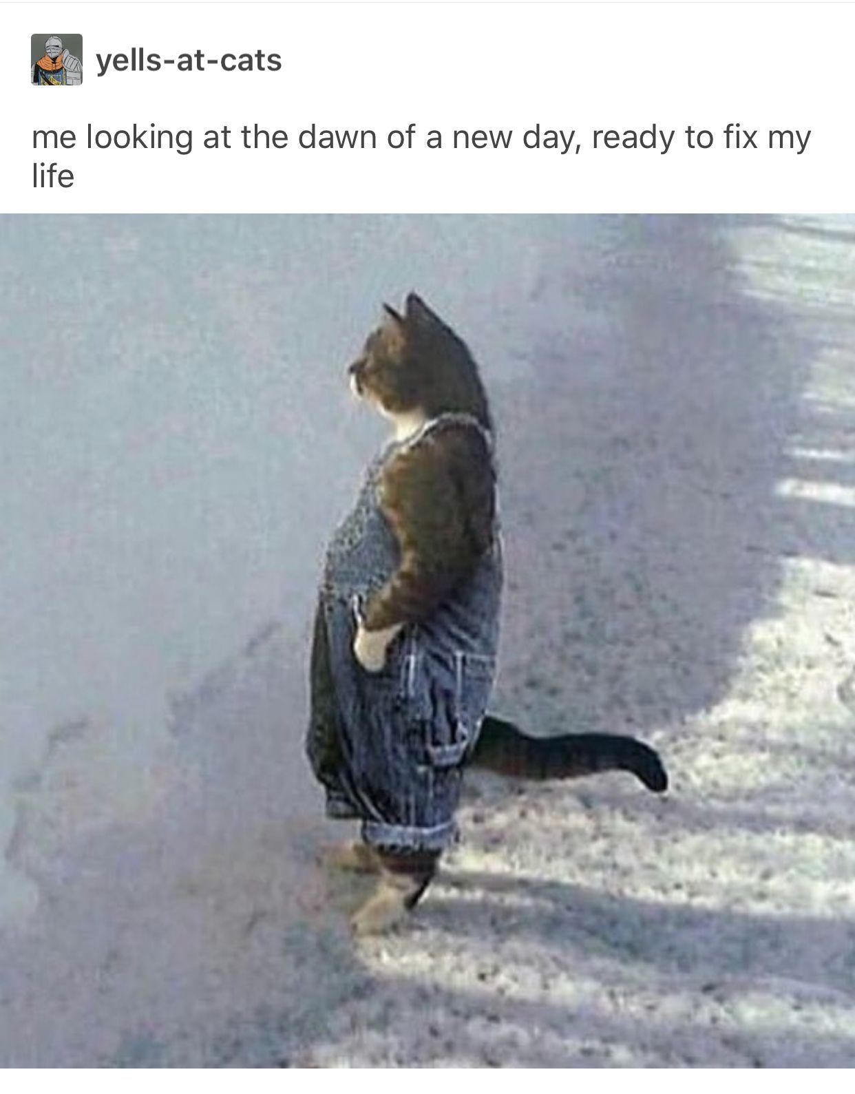 Pin By Leni On Funny Warrior Cats Funny Warrior Cat Memes Warrior Cats Comics