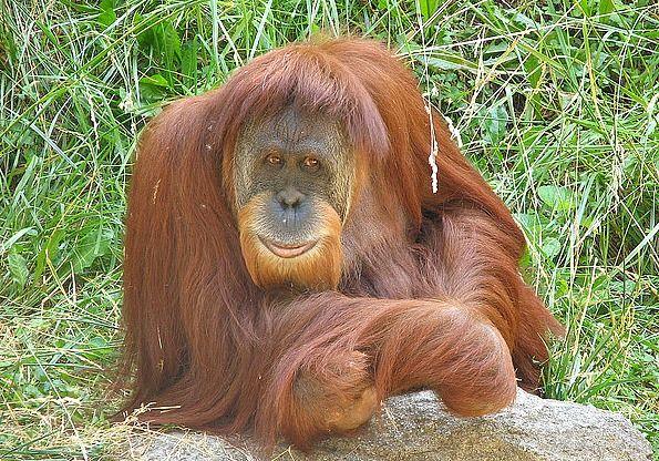 Orangutan Friendly Sustainable Palm Oil Halloween Candy
