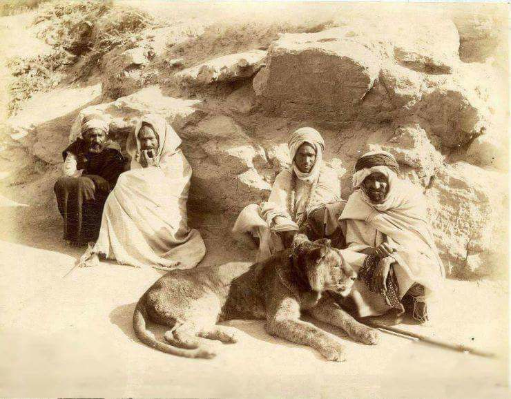 مدينة وهران في الجزائر عام 1890