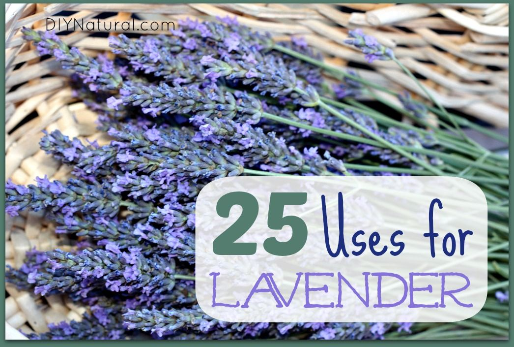 Lavender Oil Uses And Ways To Use Dry Lavendar Lavender Oil Uses Diy Natural Products Lavender