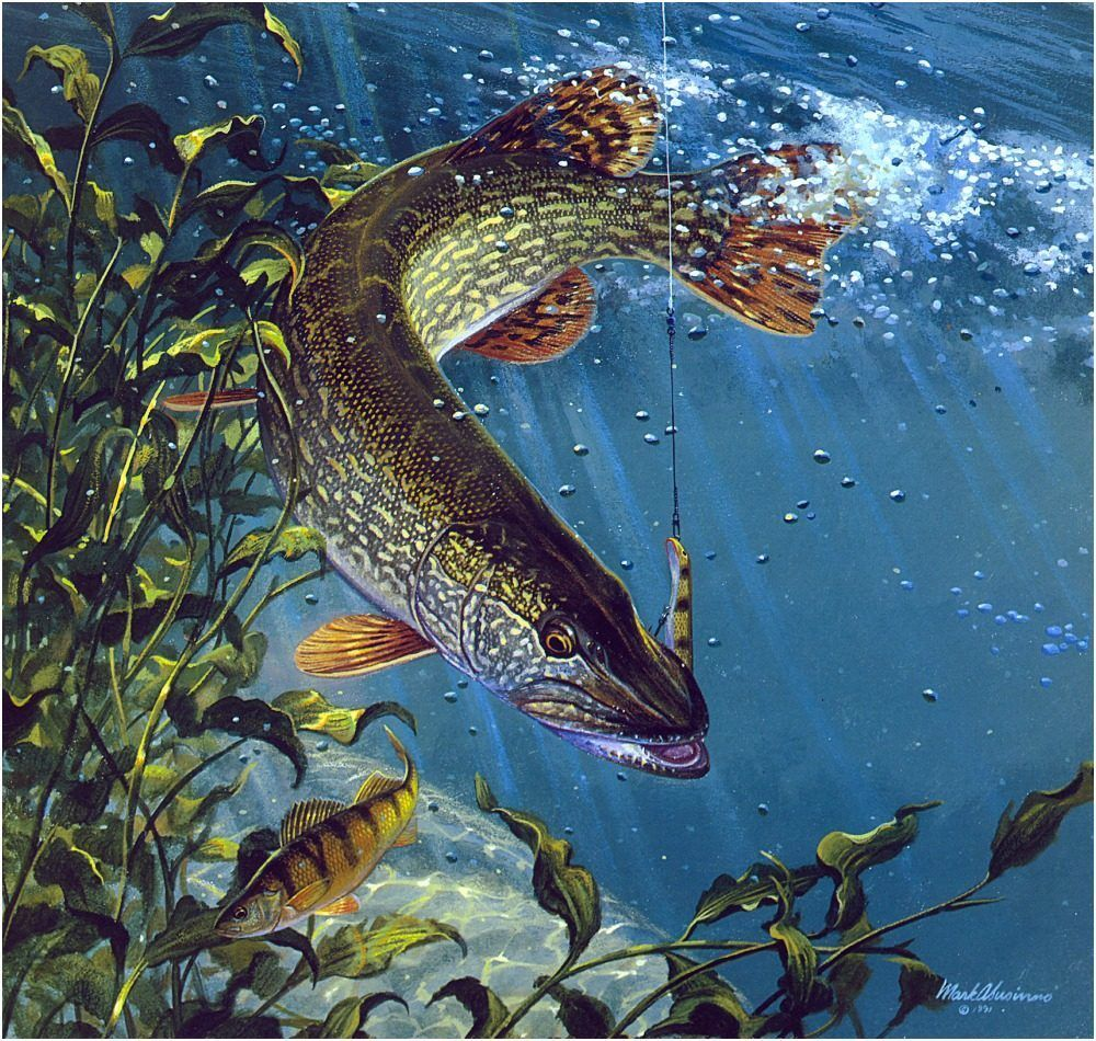Картинка ловля рыбки