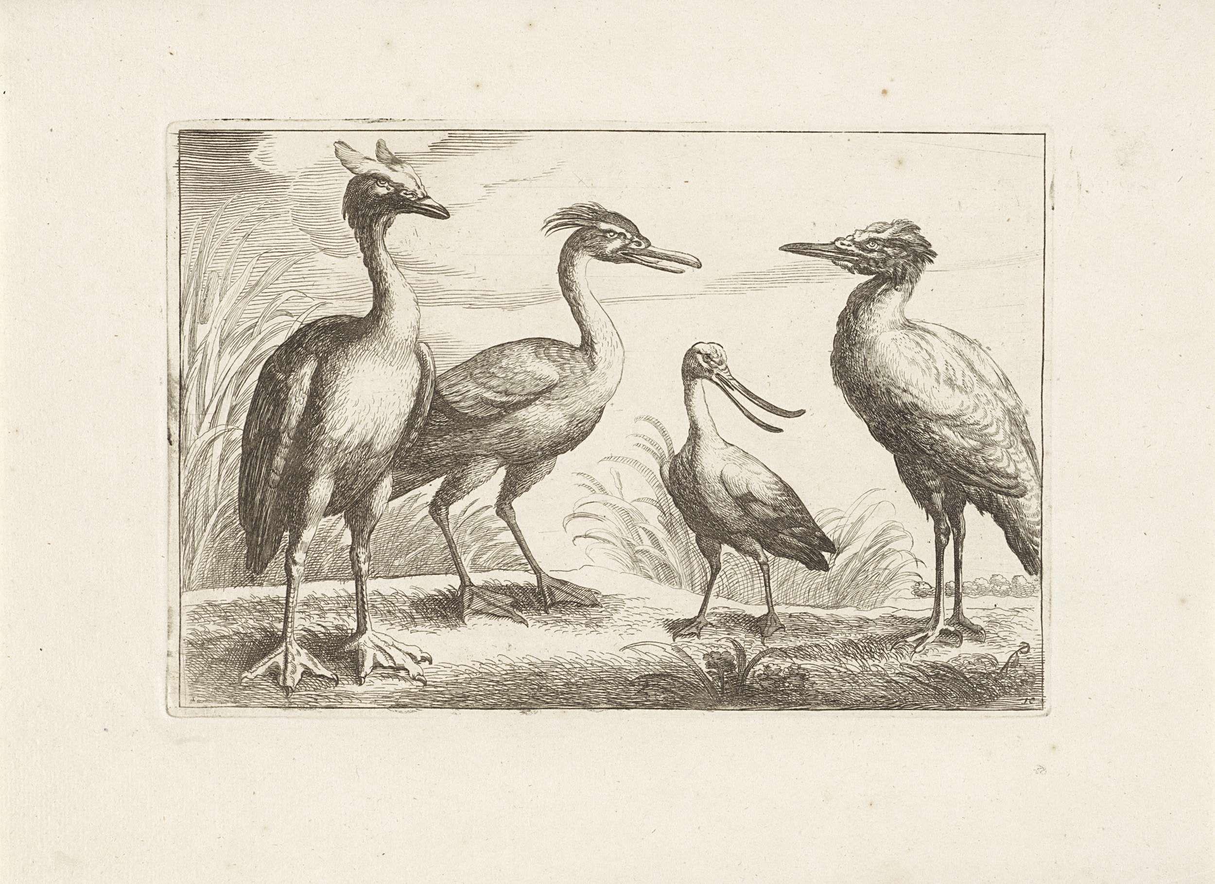 Francis Barlow | Lepelaar en drie andere loopvogels, Francis Barlow, Pieter Schenk (I), 1675 - 1711 |
