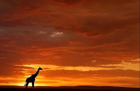 paisajes de africa - Google Search