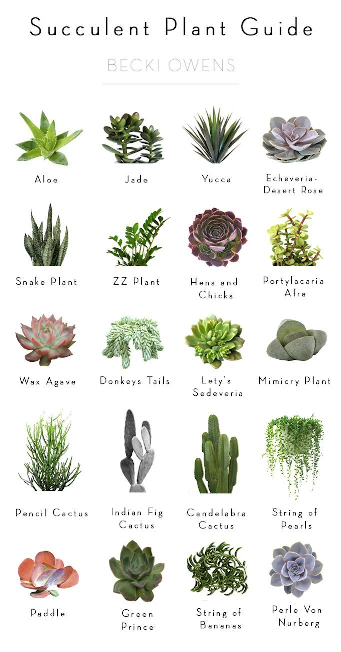 BECKI OWENS  Best Of Blog: Indoor Plants  Ideas For Styling And My Succulent