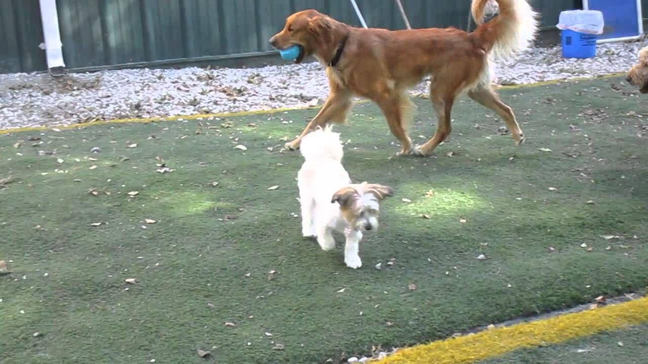 Chasing Sammy Dog daycare, Animal hospital, Veterinary
