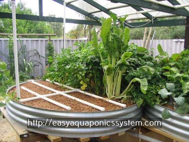 Aquaponic Gardening Community