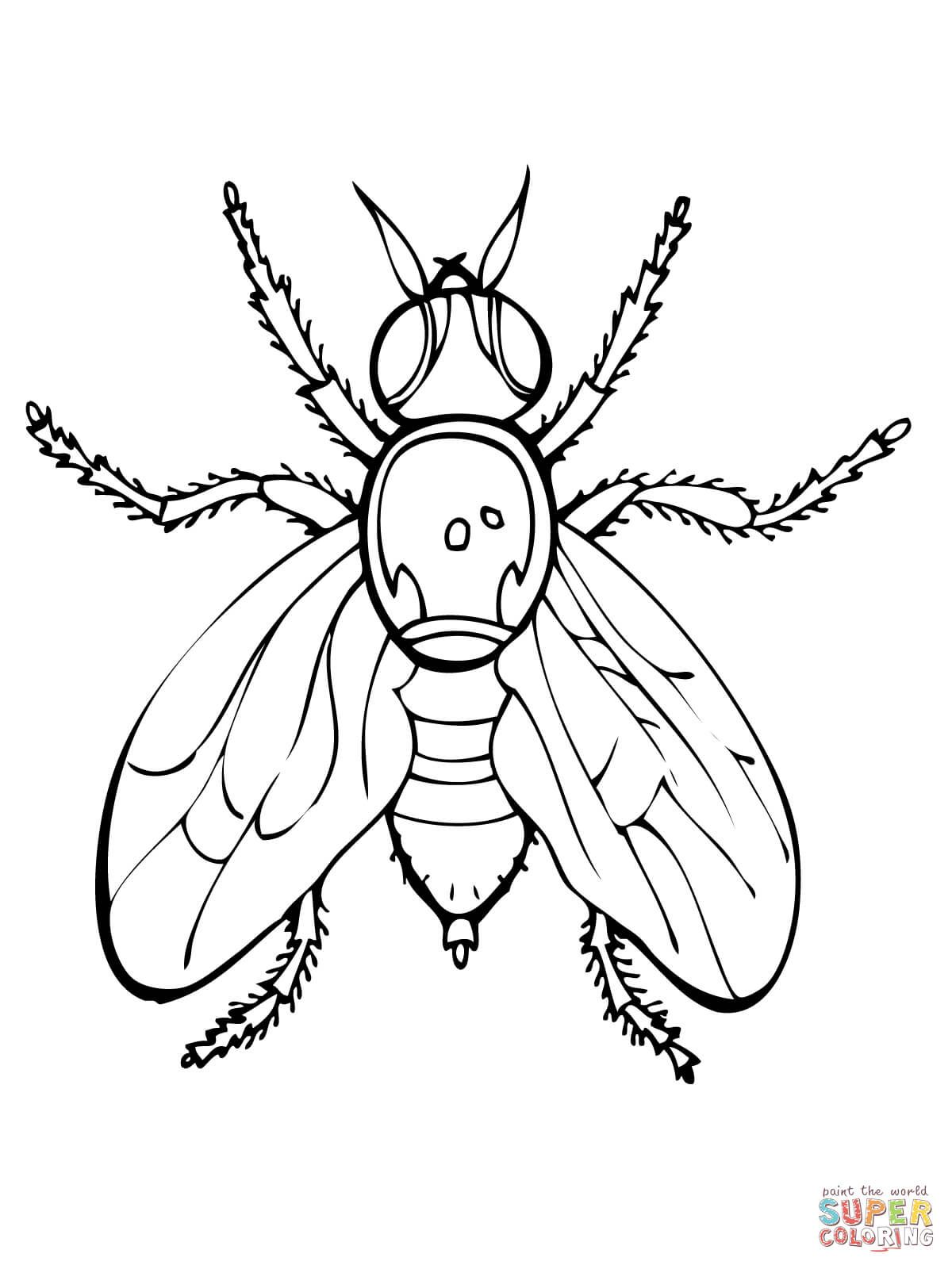 Fruit Fly Super Coloring Ten Plagues Coloring Pages