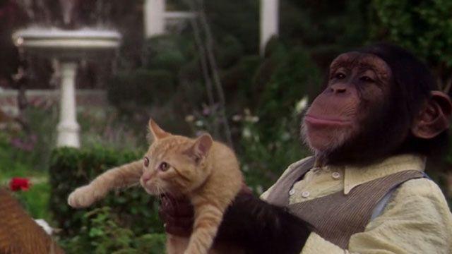 Buddy 1997 Tabby Kitten Baby Gorillas Cats