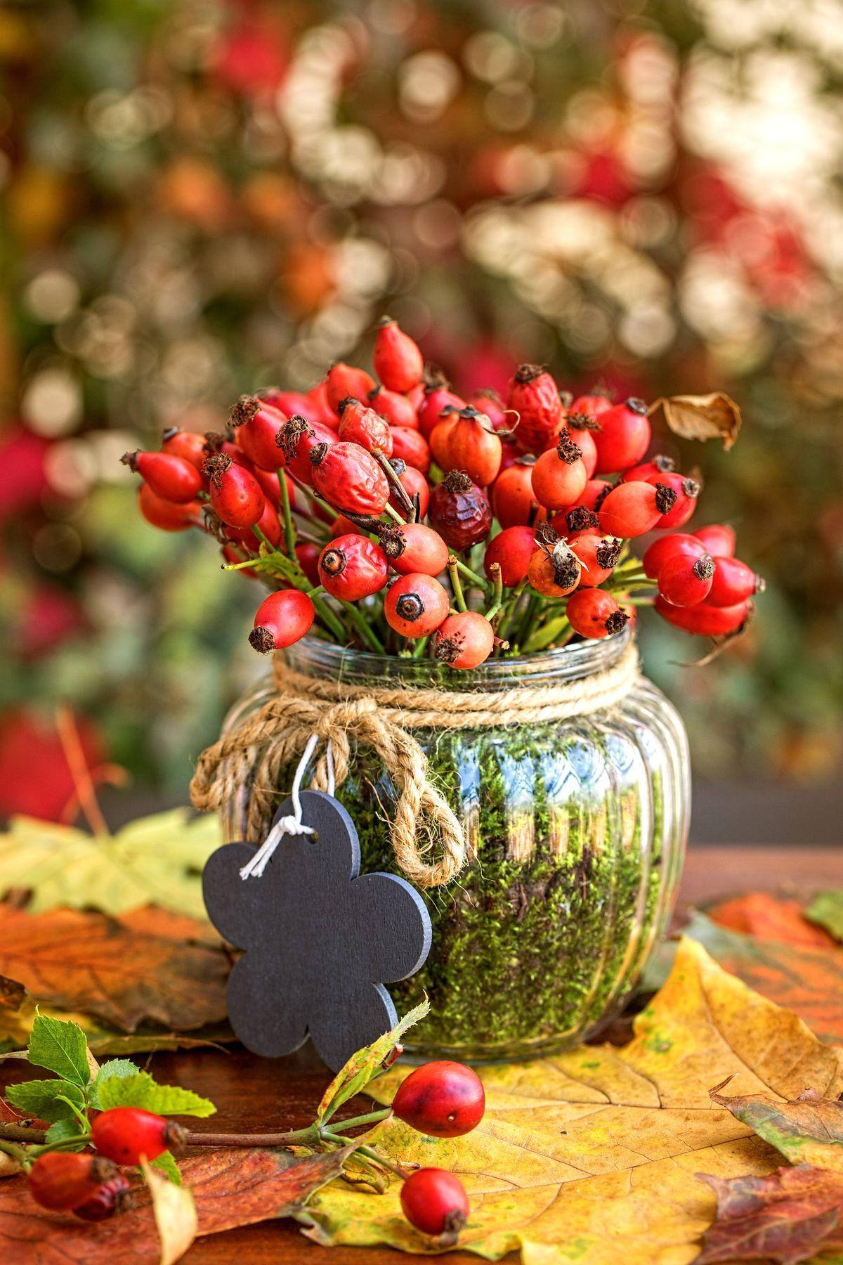 Podzim pro někoho znamená pochmurné a deštivé počasí, pro jiného radost z barevné přírody. Proto ji využijte v plné síle a přineste si domů krásné listy, kaštany i zářivě červené šípky. Ukážeme vám, jak z nich snadno vyrobit milé dekorace. #herbsttischdekorationen