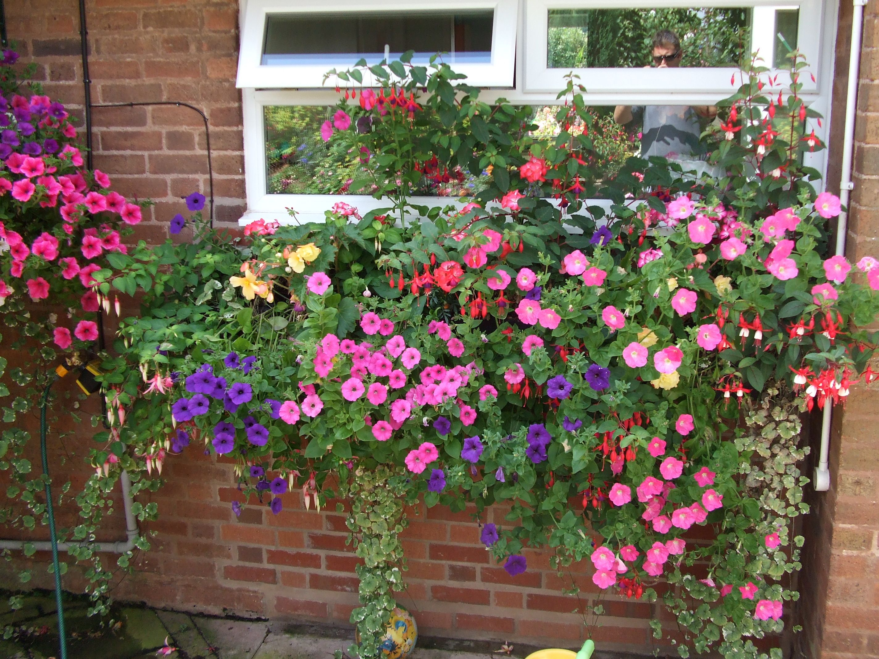 window box compilations | Garden and outdoors | Pinterest