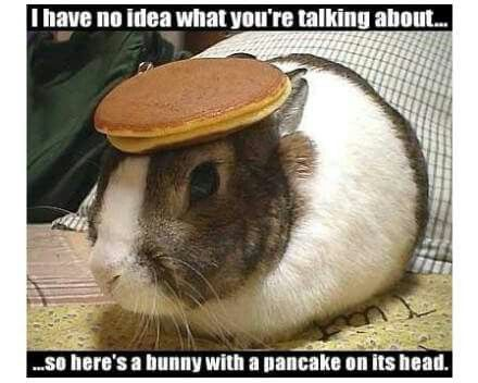 Bunny With A Pancake On His Head