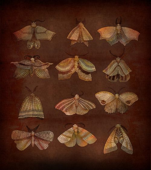 "David Fleck    ""Moth Collector"""