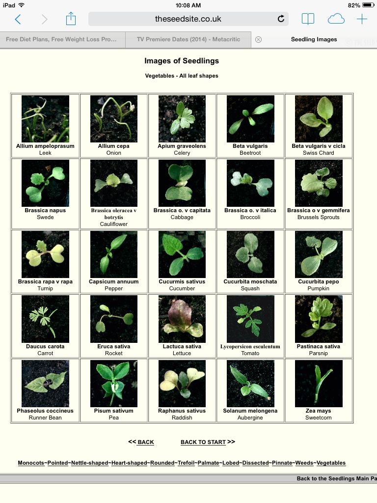 Vegetable seedling identification chart http theseedsite for Nursery charts