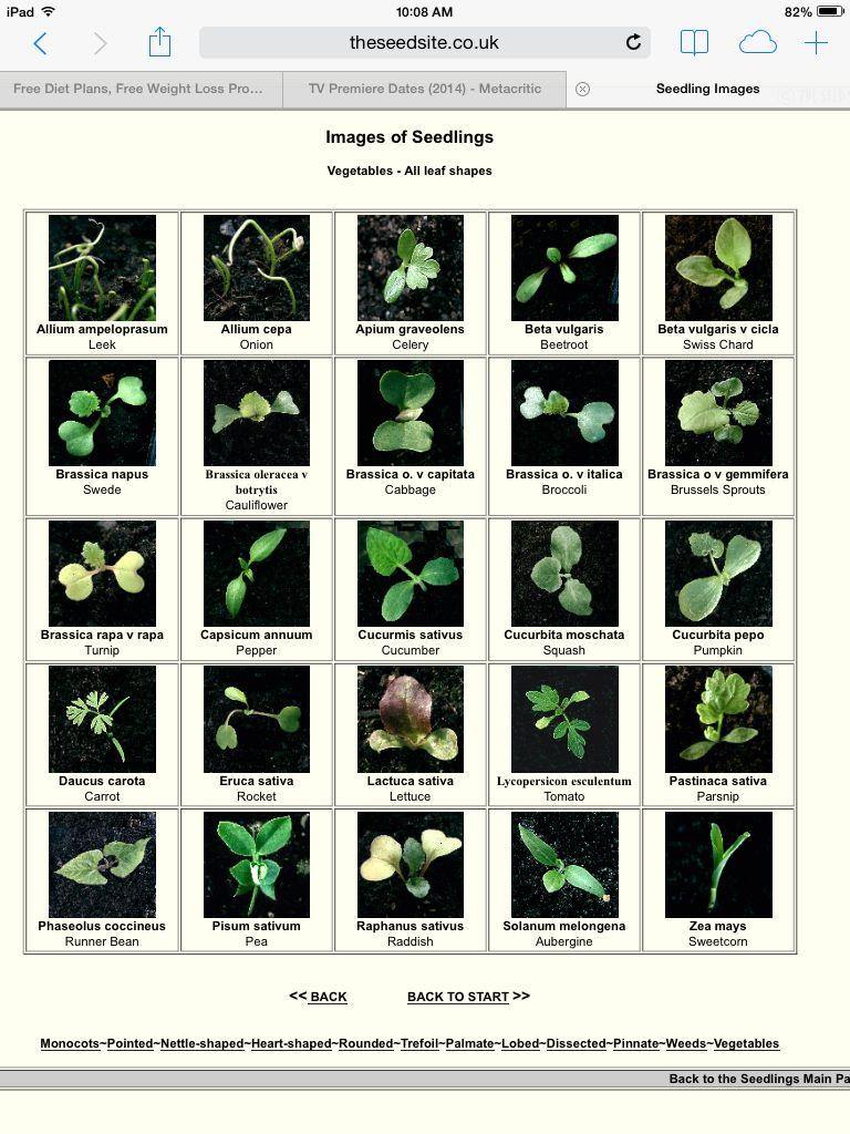 Vegetable Seedling Identification Chart Http Theseedsite Co Uk