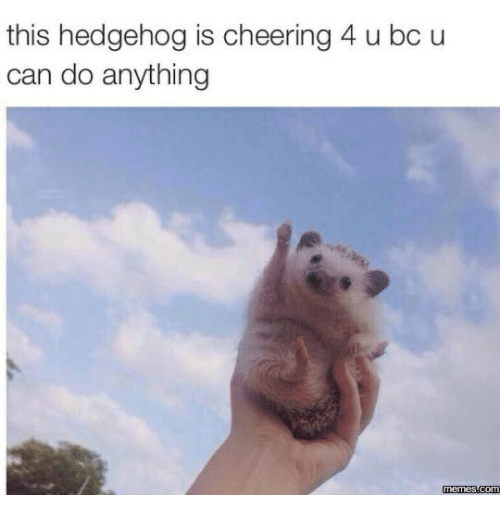25 You Can Do It Memes That Are 100 Encouraging Sayingimages Com Funny Animal Pictures Cute Animals Cute Hedgehog