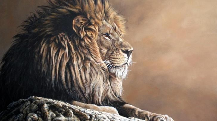 Leo The Lion Hd Wallpaper Lion Of Judah Tribe Of Judah Judah Related searches:lion lion head lions outlines outlined lion dance lion vector circus lion cartoon lion. pinterest