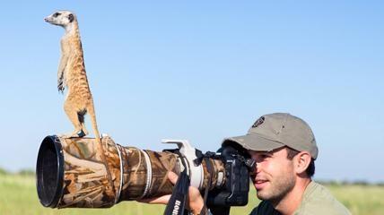 L'insospettabile amicizia fra il suricato e il fotografo
