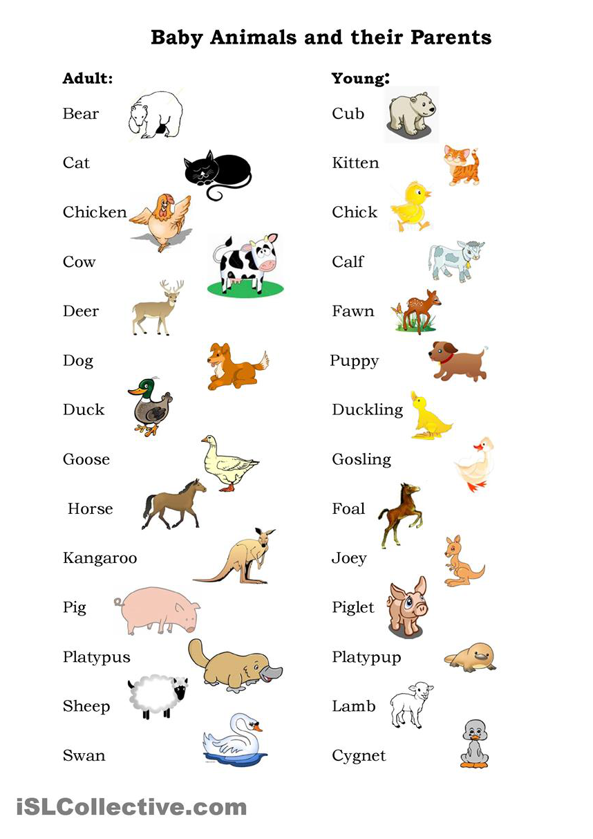 Names Of Baby Animals And Their Parents Baby Animal Names Learn English Preschool Books