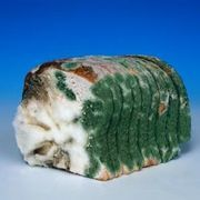 Can Mold From Bread Kill You Ehow